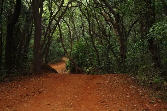 sprint-giant-matheran-path1